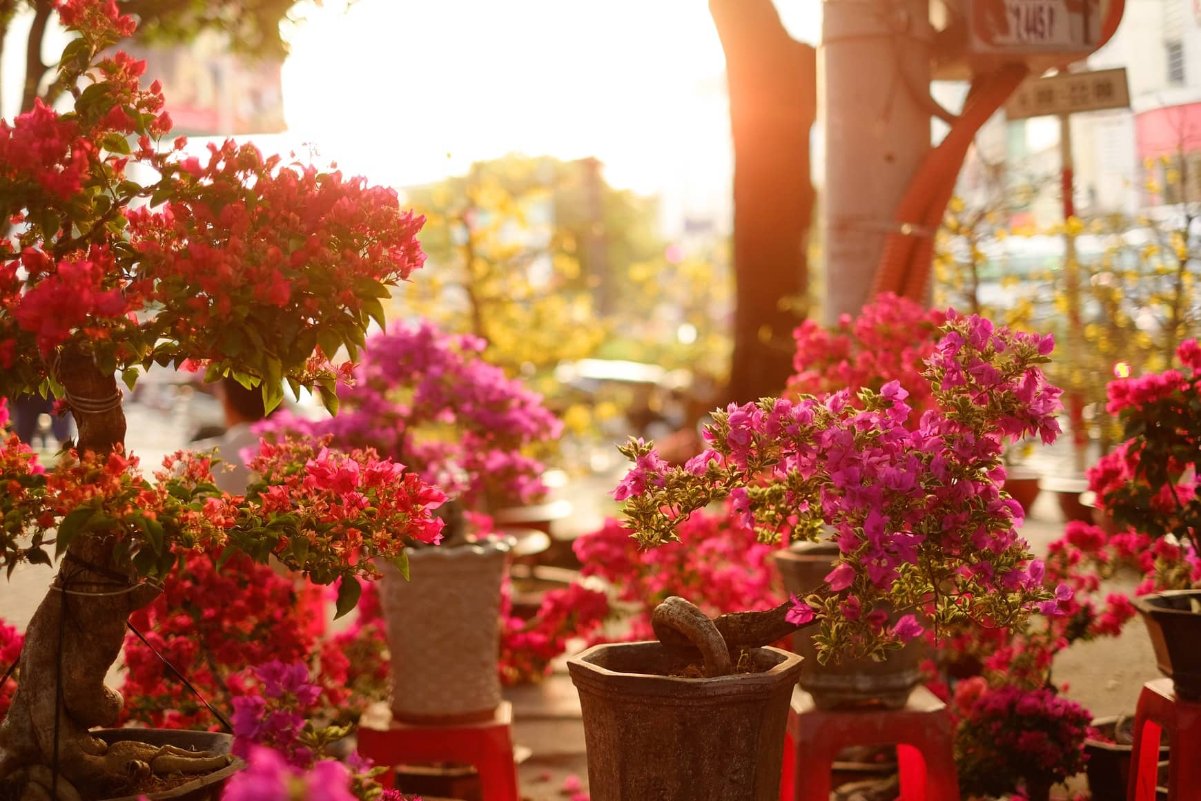 jardin zen extérieur pas cher