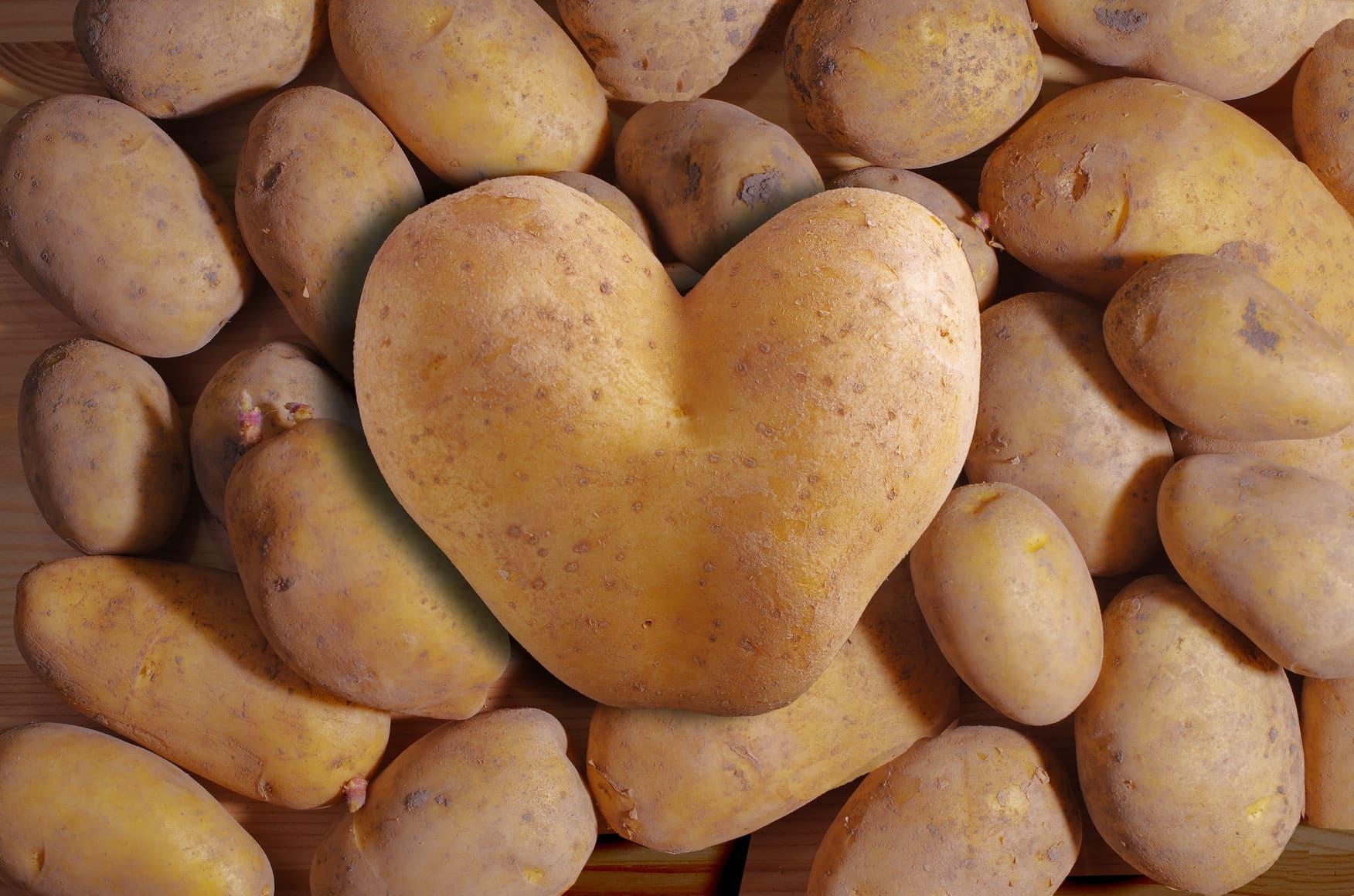 planter des pommes de terre germées