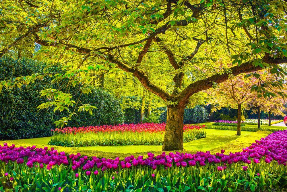arbre décoratif extérieur persistant le meilleur choix